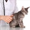 Ветеринарные клиники в Крапивинском
